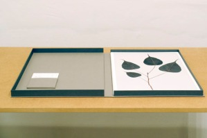 03_pipal_herbarium